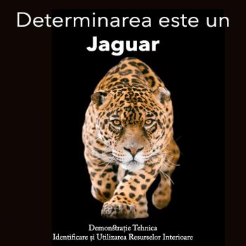 determinarea este un jaguar - sedinta terapia resurselor